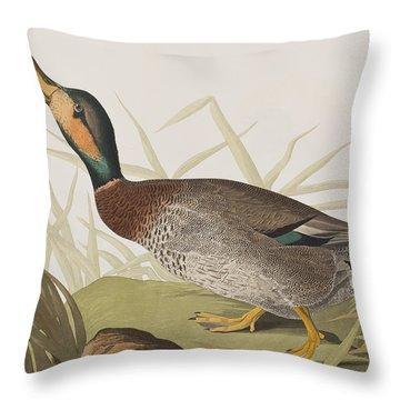 Bemaculated Duck Throw Pillow by John James Audubon