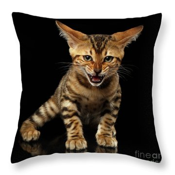 Bengal Kitty Stands And Hissing On Black Throw Pillow by Sergey Taran