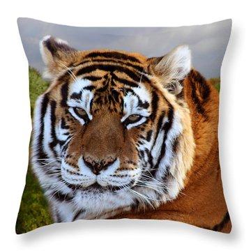 Bengal Tiger Portrait Throw Pillow