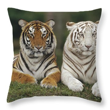 Throw Pillow featuring the photograph Bengal Tiger Team by Konrad Wothe