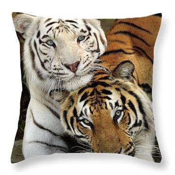 Bengal Tigers At Play Throw Pillow