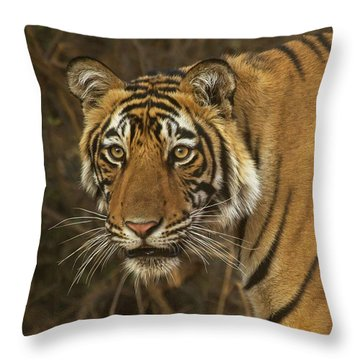 Bengale Tiger Throw Pillow