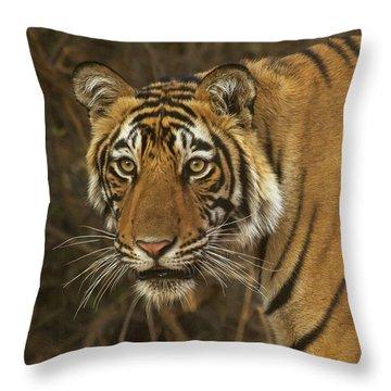 Bengale Tiger Throw Pillow