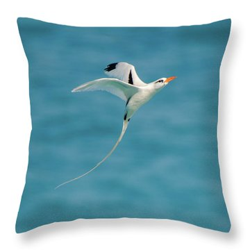 Bermuda Longtail S Curve Throw Pillow by Jeff at JSJ Photography