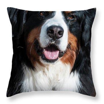 Bernese Mountain Dog Portrait  Throw Pillow