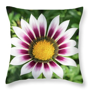 Best Face Forward Throw Pillow by Cathy Donohoue