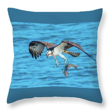 Best Osprey With Fish In One Talon Throw Pillow