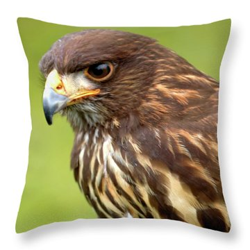 Beware The Predator Throw Pillow