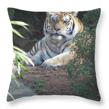 Throw Pillow featuring the photograph Beyond The Branches by Laddie Halupa