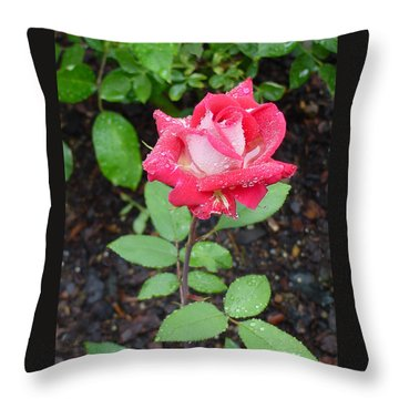 Bi-colored Rose In Rain Throw Pillow