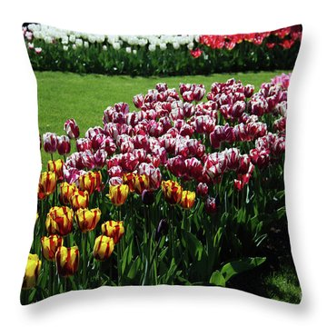 Multicolor Tulips Throw Pillow by Ana Mireles