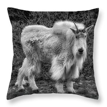 Throw Pillow featuring the photograph Big Billy by Bitter Buffalo Photography