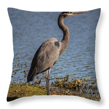 Big Bird Throw Pillow