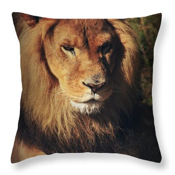 Big Boy Throw Pillow by Laurie Search