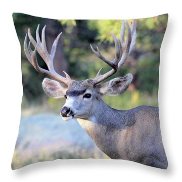 Throw Pillow featuring the photograph Big Buck by Shane Bechler