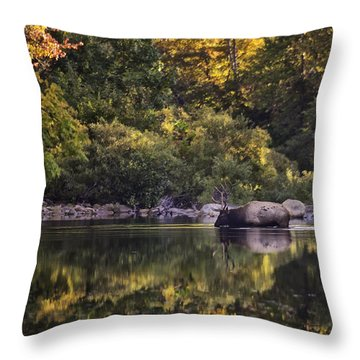 Big Bull In Buffalo National River Fall Color Throw Pillow