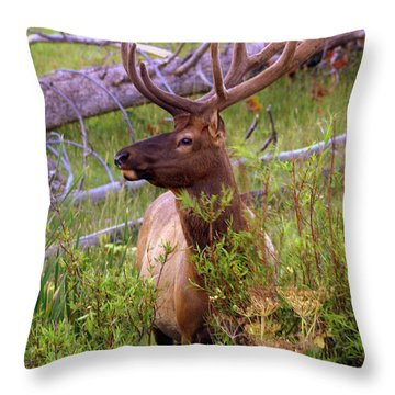 Big Bull Throw Pillow by Marty Koch