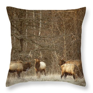 Throw Pillow featuring the photograph Big Bull Meeting In Boxley Valley by Michael Dougherty
