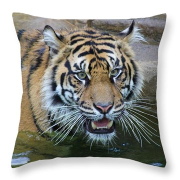Throw Pillow featuring the photograph Big Cat by Elizabeth Budd