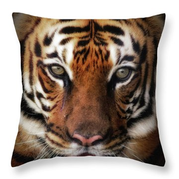 Big Cat Stare Down Throw Pillow