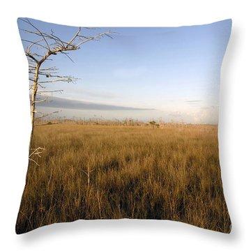 Big Cypress Throw Pillow by David Lee Thompson
