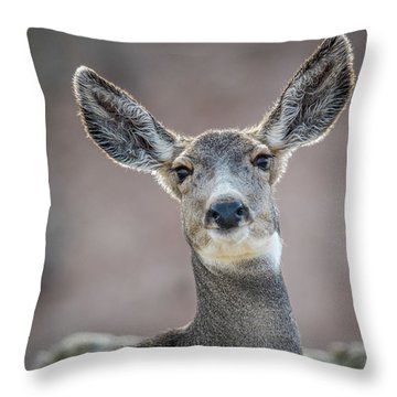 Big Eared Mule Deer Throw Pillow