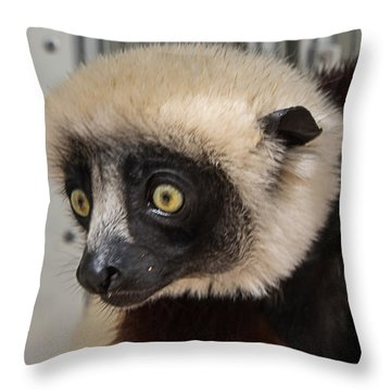 A Very Curious Sifaka Throw Pillow