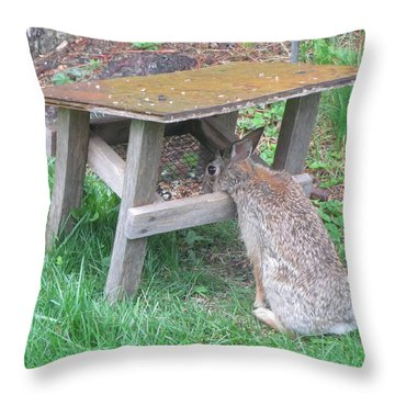 Big Eyed Rabbit Eating Birdseed Throw Pillow