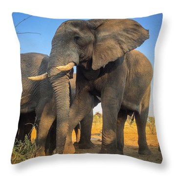 Big Guy Throw Pillow