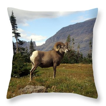 Big Horn 4   Throw Pillow by Marty Koch