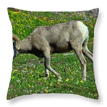 Big Horn Ram Eating Flowers In Glacier National Park Throw Pillow