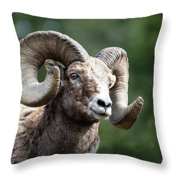 Throw Pillow featuring the photograph Big Horn Sheep by Scott Read