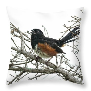 Throw Pillow featuring the photograph Big Meadows Eastern Towhee 1 by Lara Ellis
