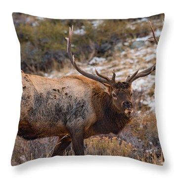 Big Rack Throw Pillow