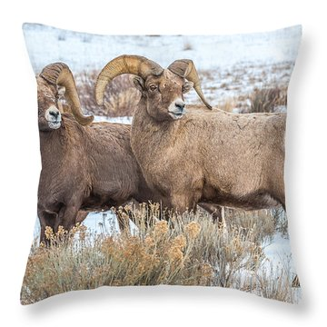 Throw Pillow featuring the photograph Big Ram Brothers by Yeates Photography