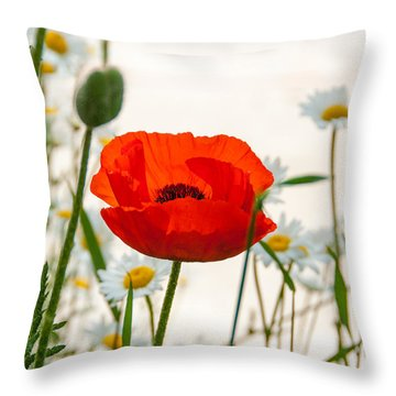Big Red Poppy Throw Pillow by Carolyn Dalessandro