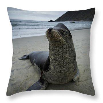 Big Seal Throw Pillow
