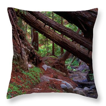 Big Sur Redwood Canyon Throw Pillow