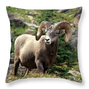 Bighorn 1 Throw Pillow by Marty Koch