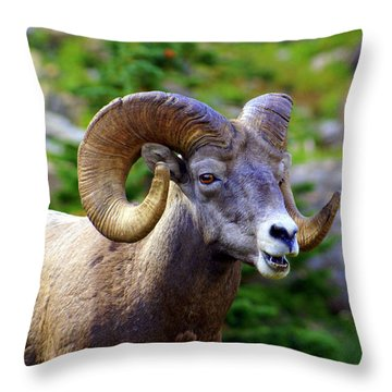 Bighorn 2 Throw Pillow by Marty Koch