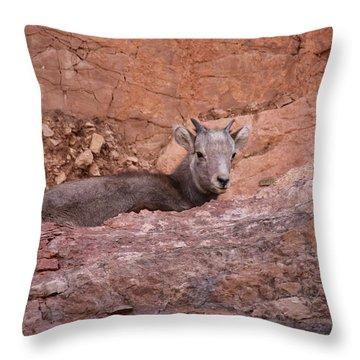 Bighorn Lamb1 Throw Pillow