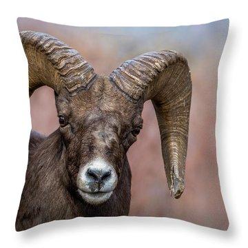 Bighorn Portrait Throw Pillow