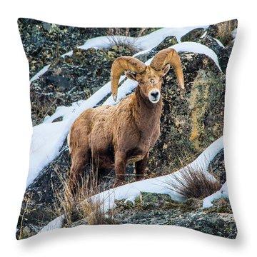 Bighorn Ram 3 Throw Pillow
