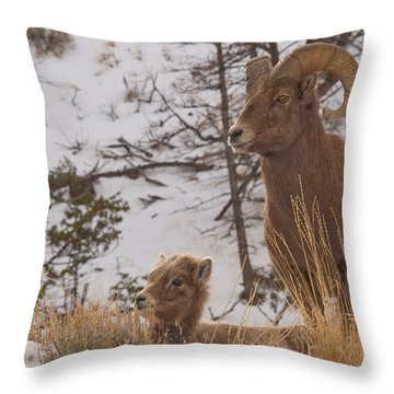 Bighorn Ram And Kid Throw Pillow