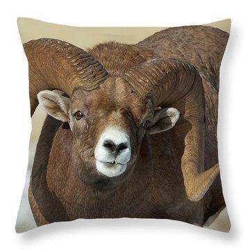 Bighorn Ram In Montana Throw Pillow