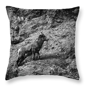 Bighorn Sheep Ewe On Wolf Creek Pass Throw Pillow