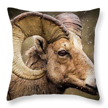 Bighorn Sheep In Winter Throw Pillow
