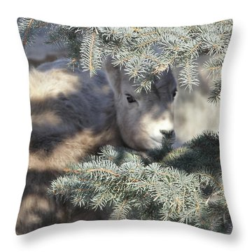 Throw Pillow featuring the photograph Bighorn Sheep Lamb's Hiding Place by Jennie Marie Schell