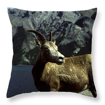 Bighorn Sheep Throw Pillow by Sally Weigand