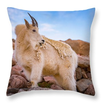 Billy Goat's Scruff Throw Pillow
